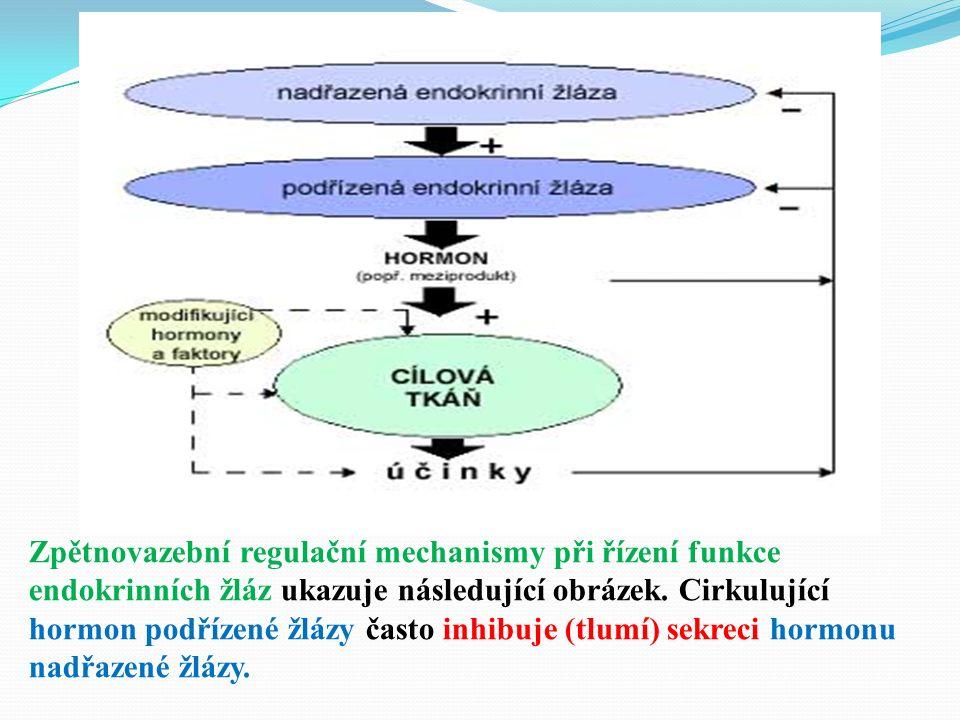 Zpětnovazební regulační mechanismy při řízení funkce endokrinních žláz ukazuje následující obrázek.