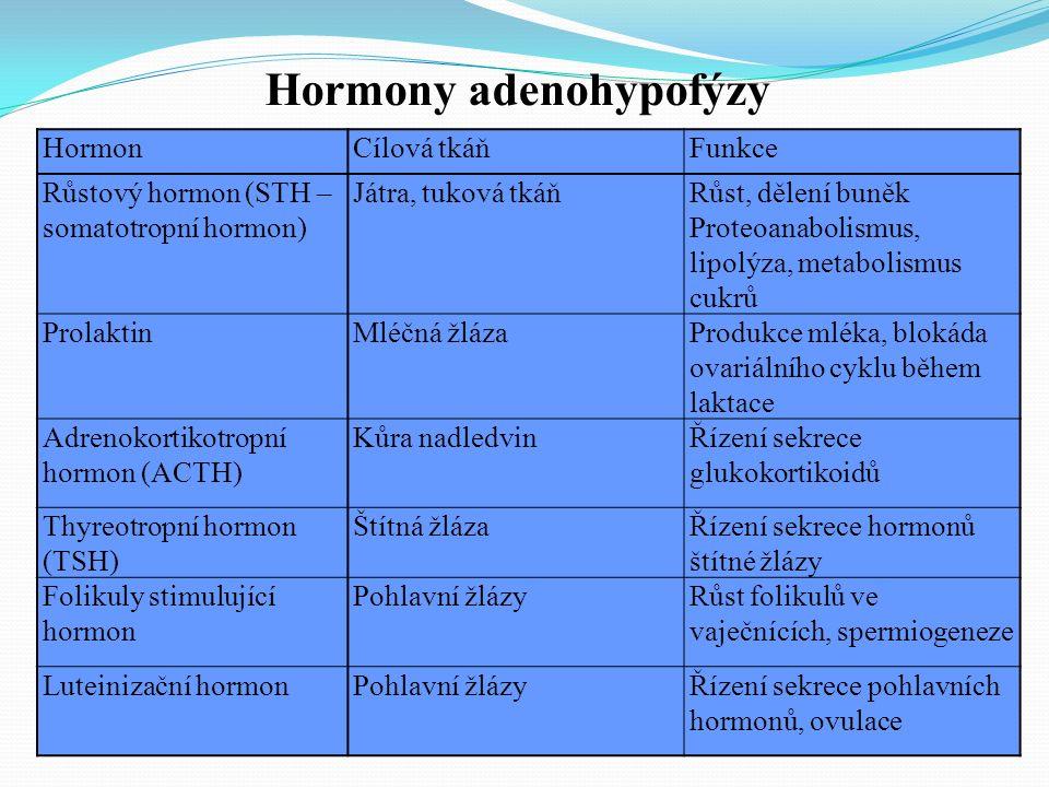 HormonCílová tkáňFunkce Růstový hormon (STH – somatotropní hormon) Játra, tuková tkáňRůst, dělení buněk Proteoanabolismus, lipolýza, metabolismus cukrů ProlaktinMléčná žlázaProdukce mléka, blokáda ovariálního cyklu během laktace Adrenokortikotropní hormon (ACTH) Kůra nadledvinŘízení sekrece glukokortikoidů Thyreotropní hormon (TSH) Štítná žlázaŘízení sekrece hormonů štítné žlázy Folikuly stimulující hormon Pohlavní žlázyRůst folikulů ve vaječnících, spermiogeneze Luteinizační hormonPohlavní žlázyŘízení sekrece pohlavních hormonů, ovulace Hormony adenohypofýzy