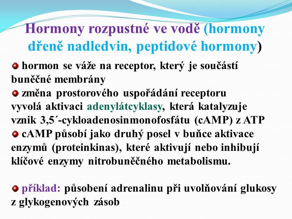 hormon se váže na receptor, který je součástí buněčné membrány změna prostorového uspořádání receptoru vyvolá aktivaci adenylátcyklasy, která katalyzuje vznik 3,5´-cykloadenosinmonofosfátu (cAMP) z ATP cAMP působí jako druhý posel v buňce aktivace enzymů (proteinkinas), které aktivují nebo inhibují klíčové enzymy nitrobuněčného metabolismu.