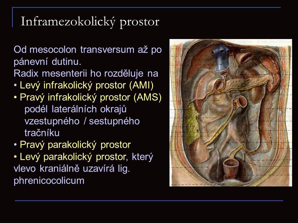 Inframezokolický prostor Od mesocolon transversum až po pánevní dutinu. Radix mesenterii ho rozděluje na Levý infrakolický prostor (AMI) Pravý infrako