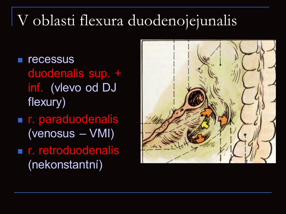 V oblasti flexura duodenojejunalis recessus duodenalis sup. + inf. (vlevo od DJ flexury) r. paraduodenalis (venosus – VMI) r. retroduodenalis (nekonst