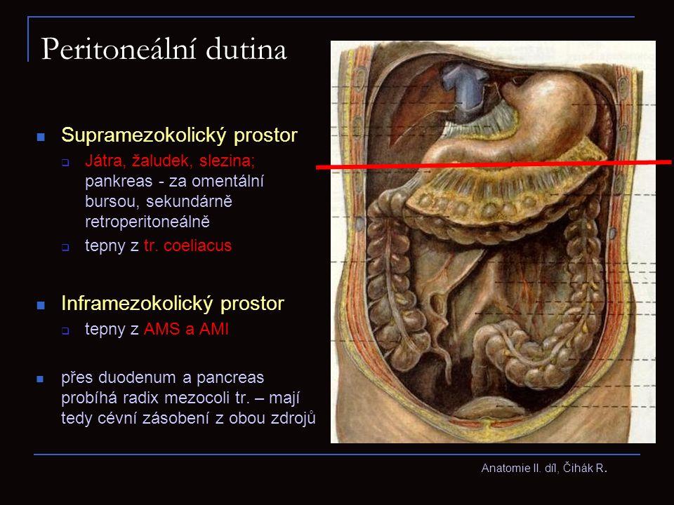 Inframezokolický prostor V inframezokolickém prostoru jsou uloženy kličky tenkého, tlustého střeva a mesenterium, ventrálně před střevními kličkami je velká předstěra (omentum maius) Protože závěsy tlustého střeva přirostly na zadní stěnu peritonea sekundárně – včetně radixu mesocoli transv., na některých místech zůstávají v zadní stěně jamky a záhyby peritonea (recessy) – jako stopy nedokonalého srůstu