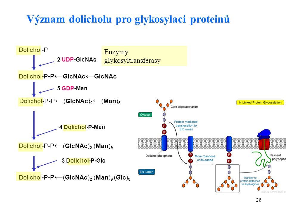 28 Dolichol-P Dolichol-P-P ← GlcNAc ← GlcNAc Dolichol-P-P ← (GlcNAc) 2 ← (Man) 5 Dolichol-P-P ← (GlcNAc) 2 (Man) 9 Dolichol-P-P ← (GlcNAc) 2 (Man) 9 (Glc) 3 2 UDP-GlcNAc 5 GDP-Man 4 Dolichol-P-Man 3 Dolichol-P-Glc Enzymy glykosyltransferasy Význam dolicholu pro glykosylaci proteinů