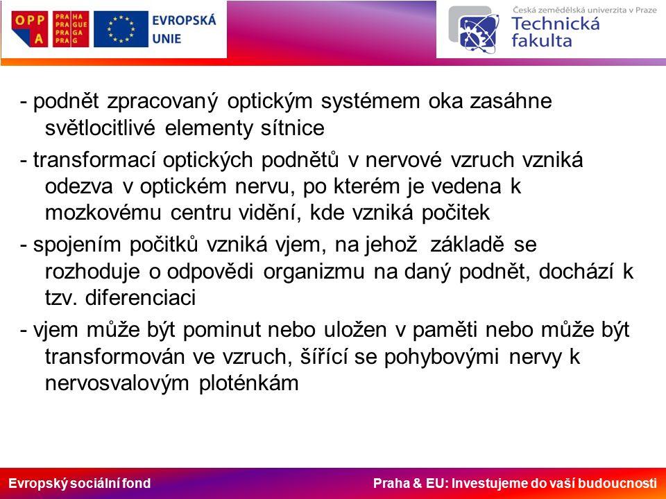 Evropský sociální fond Praha & EU: Investujeme do vaší budoucnosti - podnět zpracovaný optickým systémem oka zasáhne světlocitlivé elementy sítnice - transformací optických podnětů v nervové vzruch vzniká odezva v optickém nervu, po kterém je vedena k mozkovému centru vidění, kde vzniká počitek - spojením počitků vzniká vjem, na jehož základě se rozhoduje o odpovědi organizmu na daný podnět, dochází k tzv.
