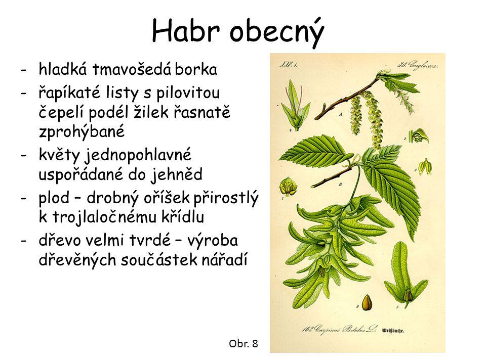 Habr obecný -hladká tmavošedá borka -řapíkaté listy s pilovitou čepelí podél žilek řasnatě zprohýbané -květy jednopohlavné uspořádané do jehněd -plod – drobný oříšek přirostlý k trojlaločnému křídlu -dřevo velmi tvrdé – výroba dřevěných součástek nářadí Obr.