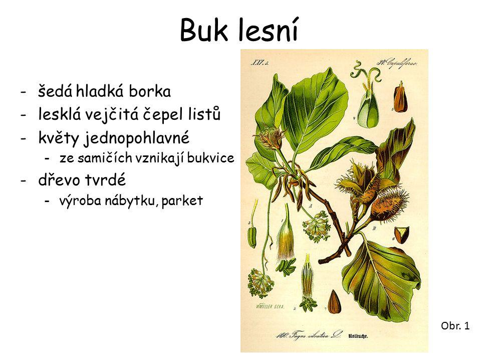 Buk lesní -šedá hladká borka -lesklá vejčitá čepel listů -květy jednopohlavné -ze samičích vznikají bukvice -dřevo tvrdé -výroba nábytku, parket Obr.