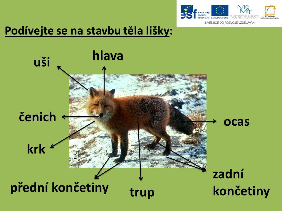 Podívejte se na stavbu těla lišky: uši hlava ocas zadní končetiny trup přední končetiny krk čenich 2