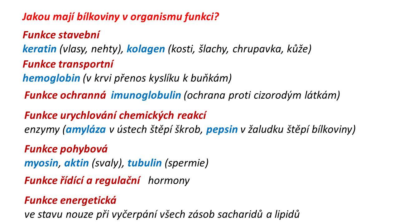 Funkce stavební keratin (vlasy, nehty), kolagen (kosti, šlachy, chrupavka, kůže) Funkce transportní hemoglobin (v krvi přenos kyslíku k buňkám) Funkce ochranná imunoglobulin (ochrana proti cizorodým látkám) Funkce řídící a regulační hormony Funkce pohybová myosin, aktin (svaly), tubulin (spermie) Funkce urychlování chemických reakcí enzymy (amyláza v ústech štěpí škrob, pepsin v žaludku štěpí bílkoviny) Funkce energetická ve stavu nouze při vyčerpání všech zásob sacharidů a lipidů Jakou mají bílkoviny v organismu funkci?