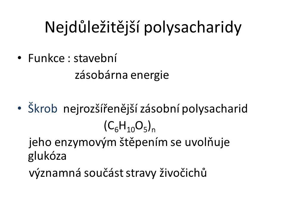 Nejdůležitější polysacharidy Funkce : stavební zásobárna energie Škrob nejrozšířenější zásobní polysacharid (C 6 H 10 O 5 ) n jeho enzymovým štěpením se uvolňuje glukóza významná součást stravy živočichů