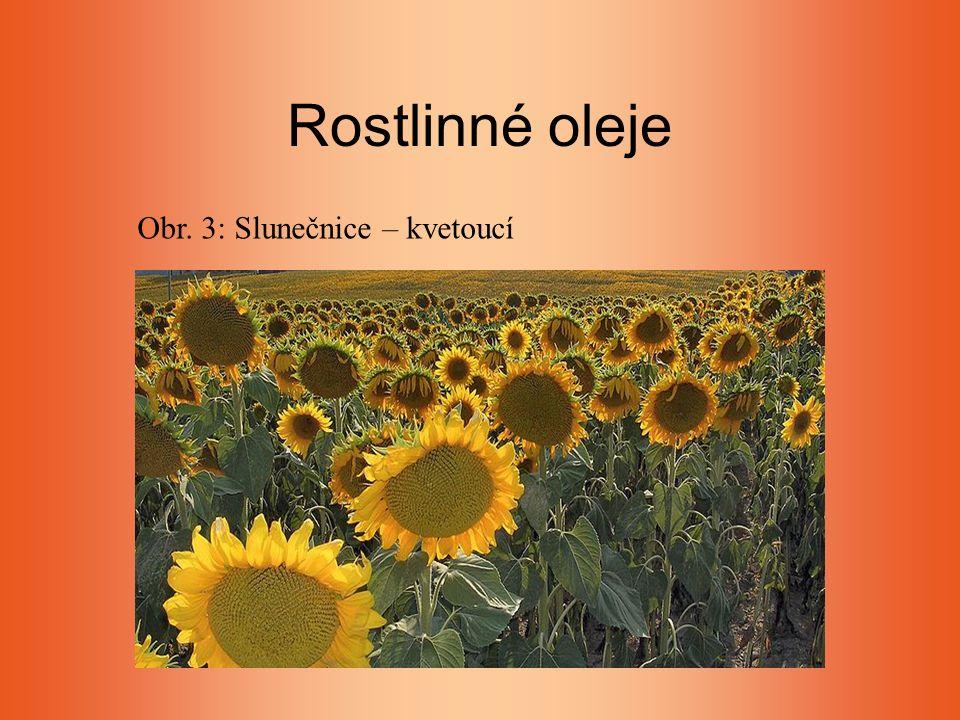 Rostlinné oleje Obr. 3: Slunečnice – kvetoucí