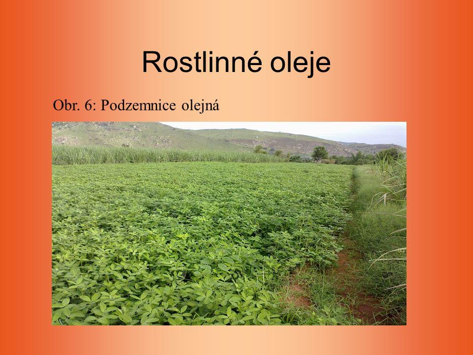 Rostlinné oleje Obr. 6: Podzemnice olejná