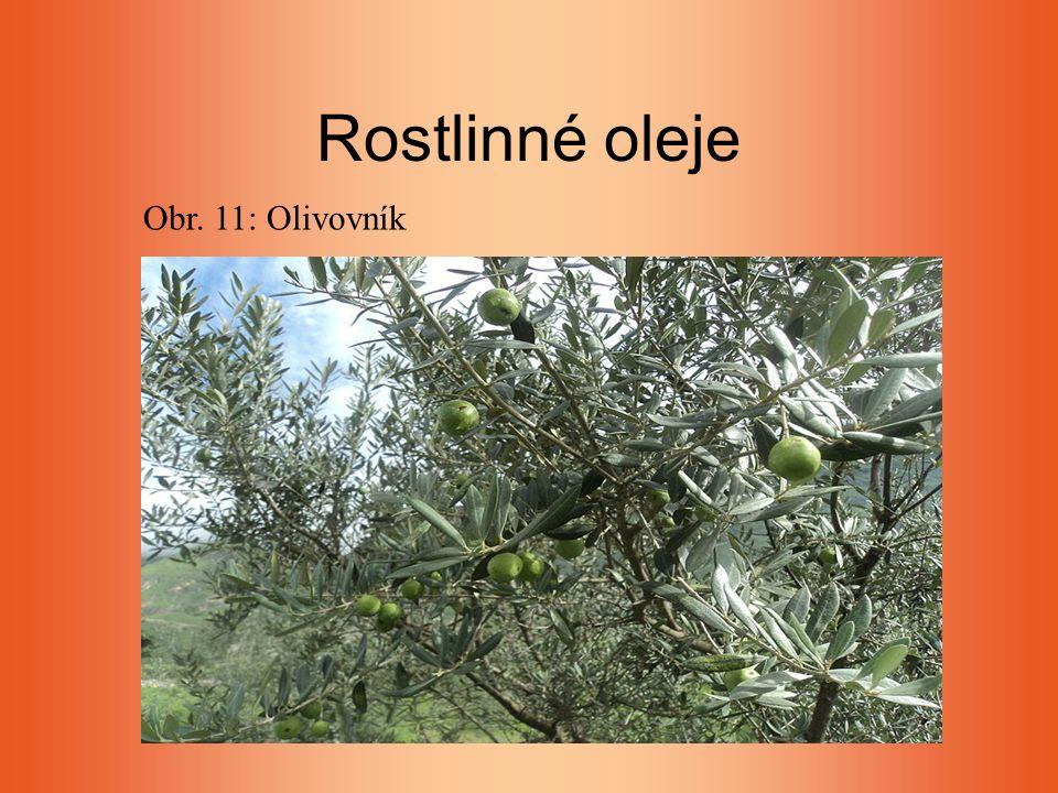 Rostlinné oleje Obr. 11: Olivovník