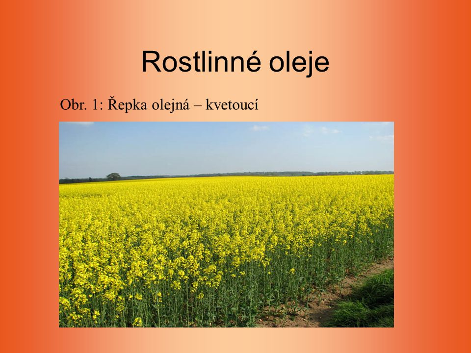 Rostlinné oleje Obr. 1: Řepka olejná – kvetoucí