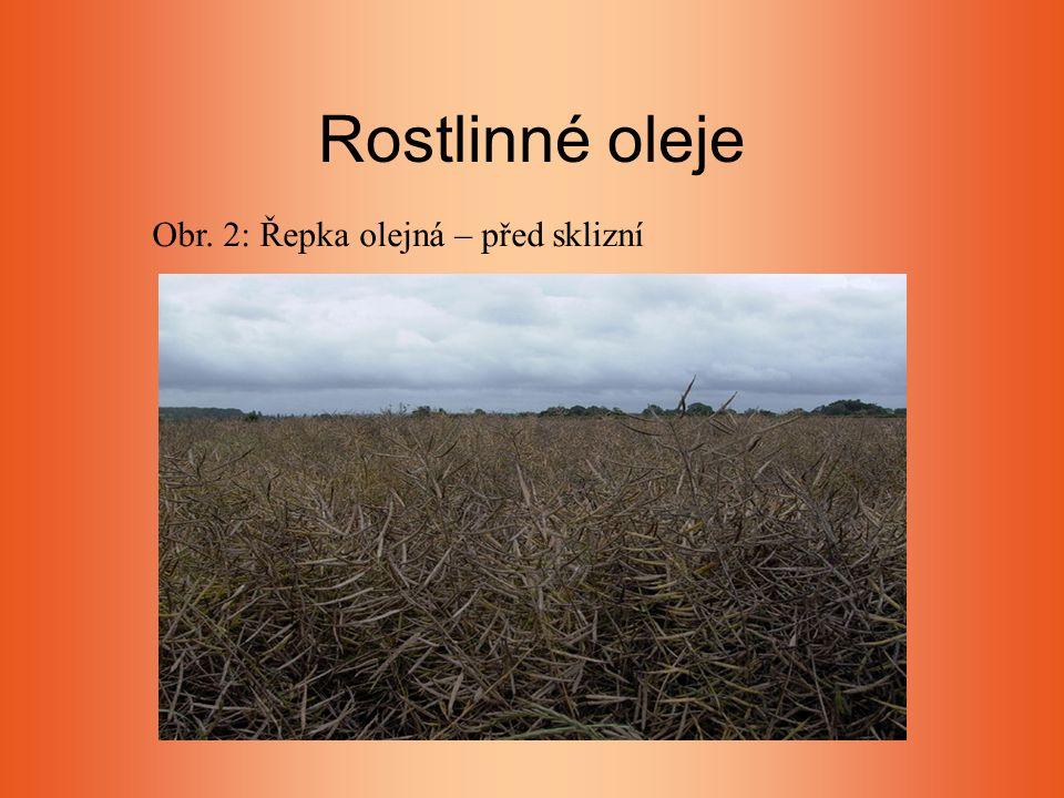 Rostlinné oleje Obr. 2: Řepka olejná – před sklizní