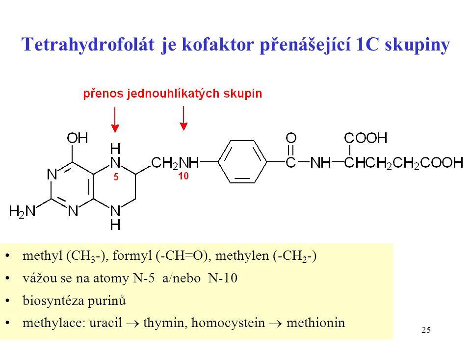 25 Tetrahydrofolát je kofaktor přenášející 1C skupiny methyl (CH 3 -), formyl (-CH=O), methylen (-CH 2 -) vážou se na atomy N-5 a/nebo N-10 biosyntéza