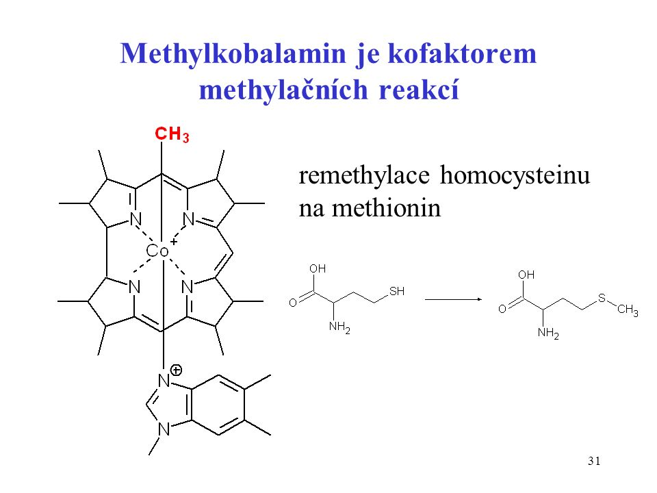 31 Methylkobalamin je kofaktorem methylačních reakcí remethylace homocysteinu na methionin