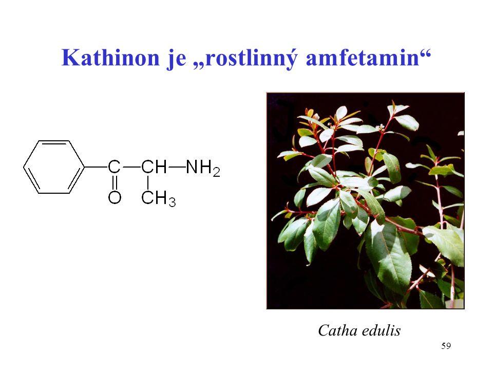 "59 Kathinon je ""rostlinný amfetamin"" Catha edulis"