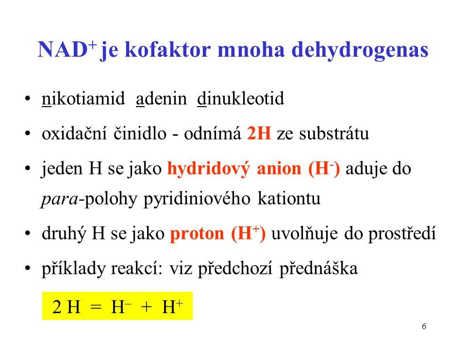 6 NAD + je kofaktor mnoha dehydrogenas nikotiamid adenin dinukleotid oxidační činidlo - odnímá 2H ze substrátu jeden H se jako hydridový anion (H - )