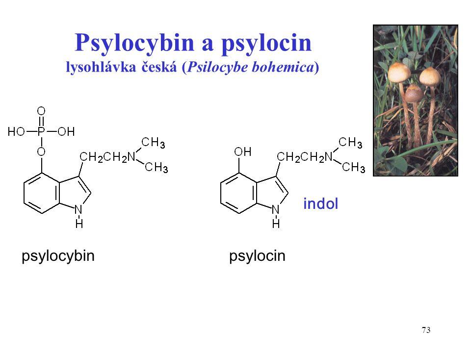 73 Psylocybin a psylocin lysohlávka česká (Psilocybe bohemica) psylocybin psylocin indol