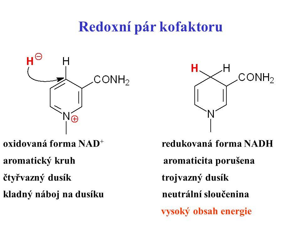 8 Redoxní pár kofaktoru oxidovaná forma NAD + redukovaná forma NADH aromatický kruh aromaticita porušena čtyřvazný dusík trojvazný dusík kladný náboj