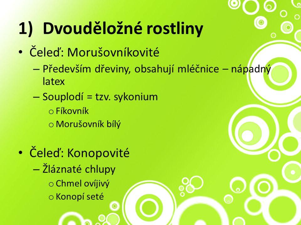 1)Dvouděložné rostliny Čeleď: Morušovníkovité – Především dřeviny, obsahují mléčnice – nápadný latex – Souplodí = tzv.