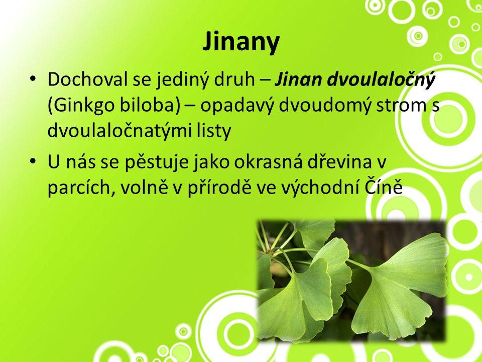 Jinany Dochoval se jediný druh – Jinan dvoulaločný (Ginkgo biloba) – opadavý dvoudomý strom s dvoulaločnatými listy U nás se pěstuje jako okrasná dřevina v parcích, volně v přírodě ve východní Číně