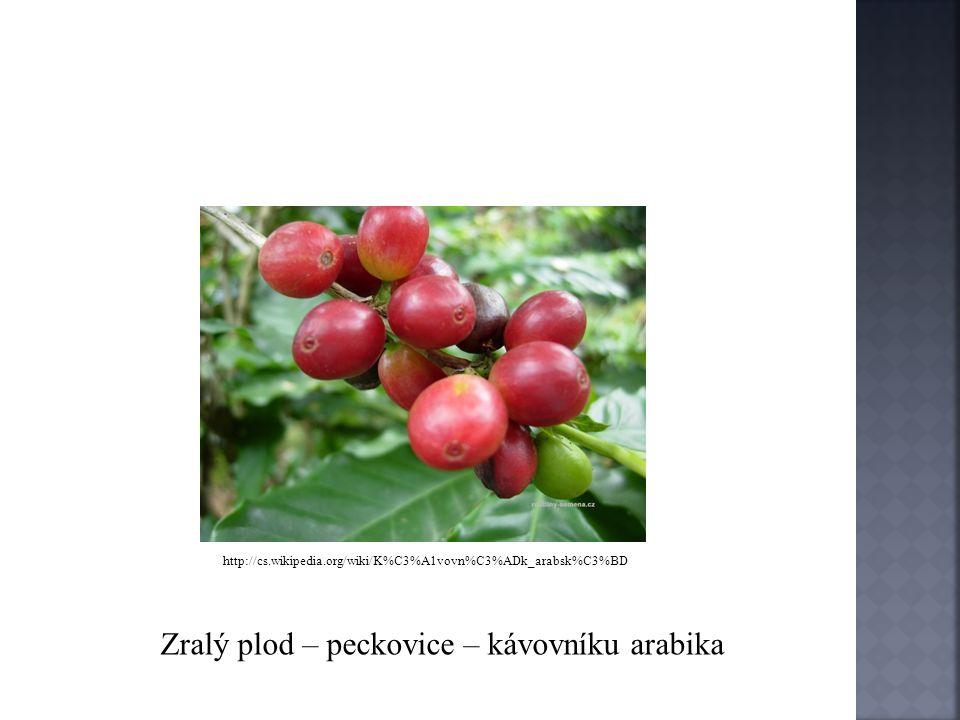 o Nejčastěji se pěstuje kávovník arabika, je méně odolný proti nemocem o Kávovník robusta je odolnější proti nemocem, ale ve srovnání s arabikou má drsnější chuť, obsahuje více kofeinu o Kávovník liberijský má velmi hořkou chuť o Plodem kávovníku jsou peckovice, nezralé mají zelenou barvu, dozráváním se barva mění na červenou až červenofialovou o Plod obsahuje 2 pecičky, z nichž každá obsahuje 1 až 2 kávová semena