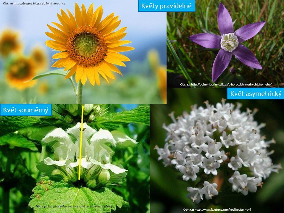 Obr. 14: http://www.kvetena.com/kozlikovite.html Obr. 11: http://deegee.blog.cz/0809/slunecnice Obr. 13: http://botanika.wendys.cz/slovnik/heslo.php?6