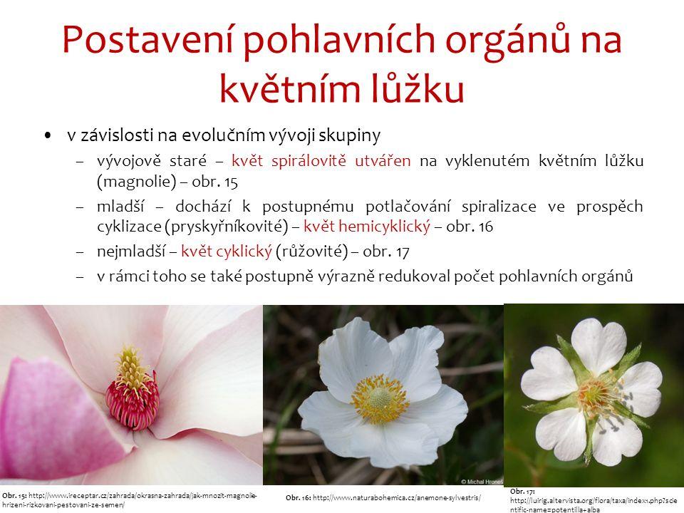 Postavení pohlavních orgánů na květním lůžku v závislosti na evolučním vývoji skupiny –vývojově staré – květ spirálovitě utvářen na vyklenutém květním lůžku (magnolie) – obr.