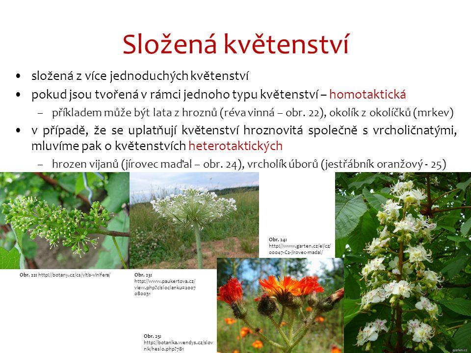 Složená květenství složená z více jednoduchých květenství pokud jsou tvořená v rámci jednoho typu květenství – homotaktická –příkladem může být lata z hroznů (réva vinná – obr.