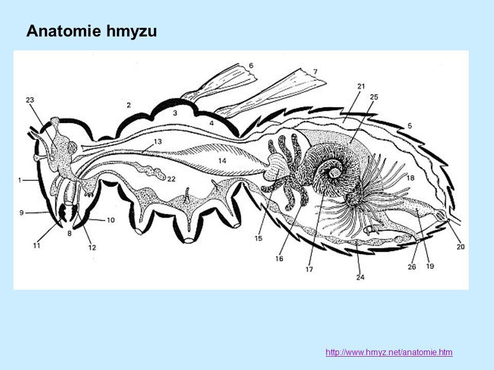 Anatomie hmyzu http://www.hmyz.net/anatomie.htm