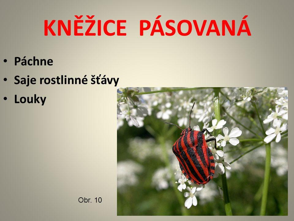 KNĚŽICE PÁSOVANÁ Páchne Saje rostlinné šťávy Louky Obr. 10