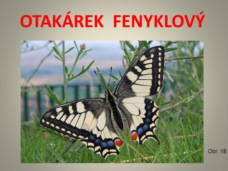 OTAKÁREK FENYKLOVÝ Obr. 18