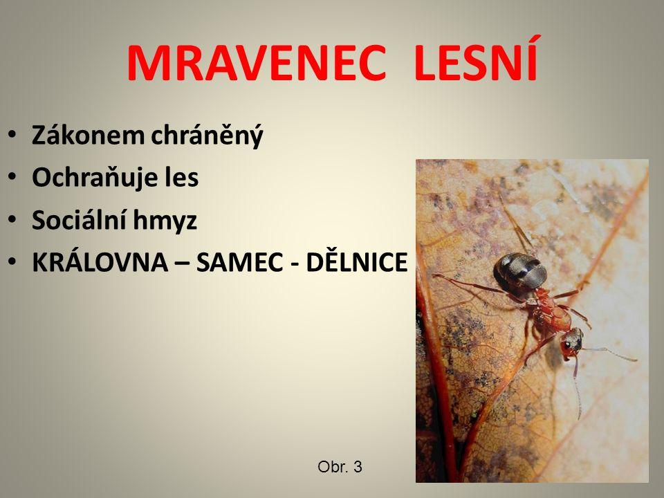 MRAVENEC LESNÍ Zákonem chráněný Ochraňuje les Sociální hmyz KRÁLOVNA – SAMEC - DĚLNICE Obr. 3