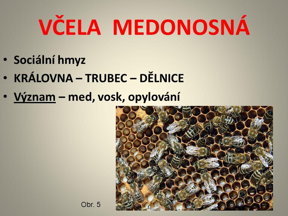 Sociální hmyz KRÁLOVNA – TRUBEC – DĚLNICE Význam – med, vosk, opylování VČELA MEDONOSNÁ Obr. 5