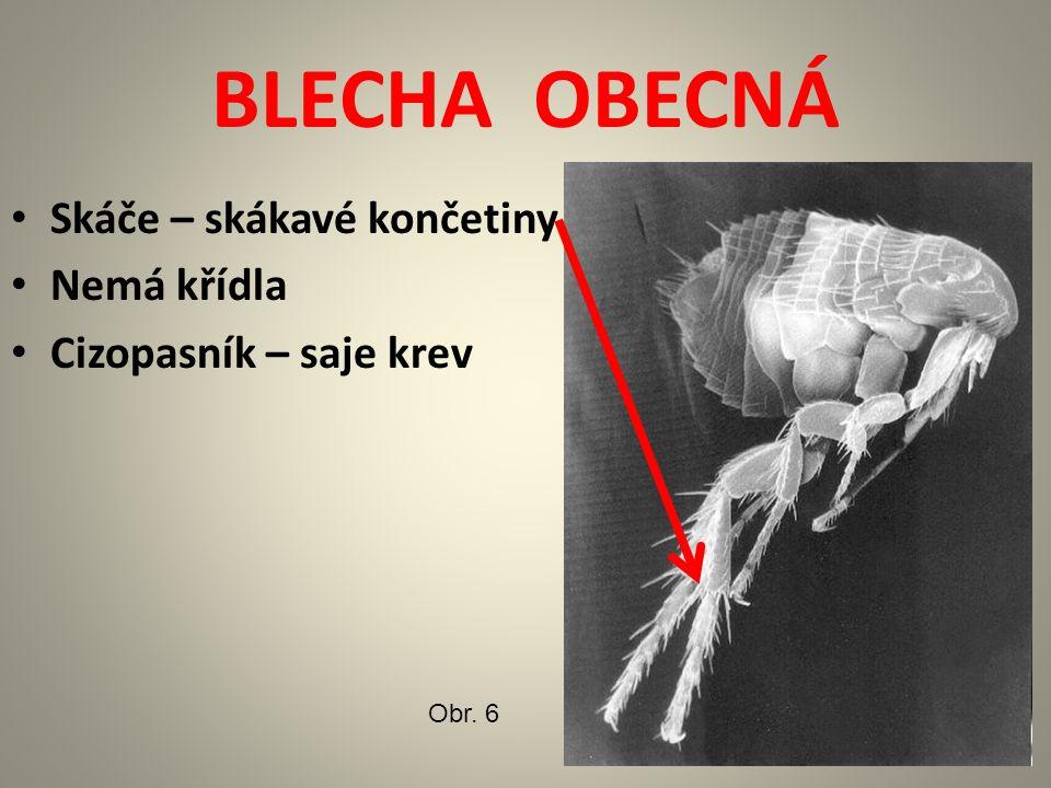 BLECHA OBECNÁ Skáče – skákavé končetiny Nemá křídla Cizopasník – saje krev Obr. 6