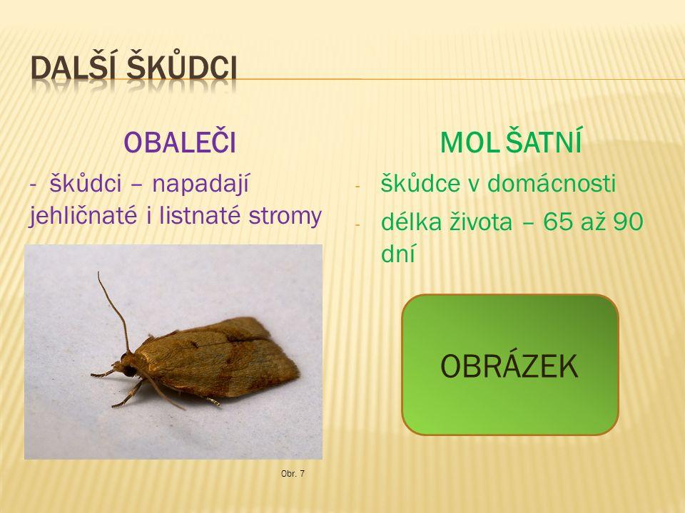 OBALEČI - škůdci – napadají jehličnaté i listnaté stromy MOL ŠATNÍ - škůdce v domácnosti - délka života – 65 až 90 dní Obr.