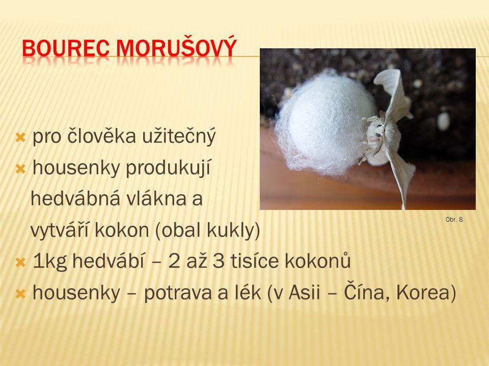  pro člověka užitečný  housenky produkují hedvábná vlákna a vytváří kokon (obal kukly)  1kg hedvábí – 2 až 3 tisíce kokonů  housenky – potrava a l