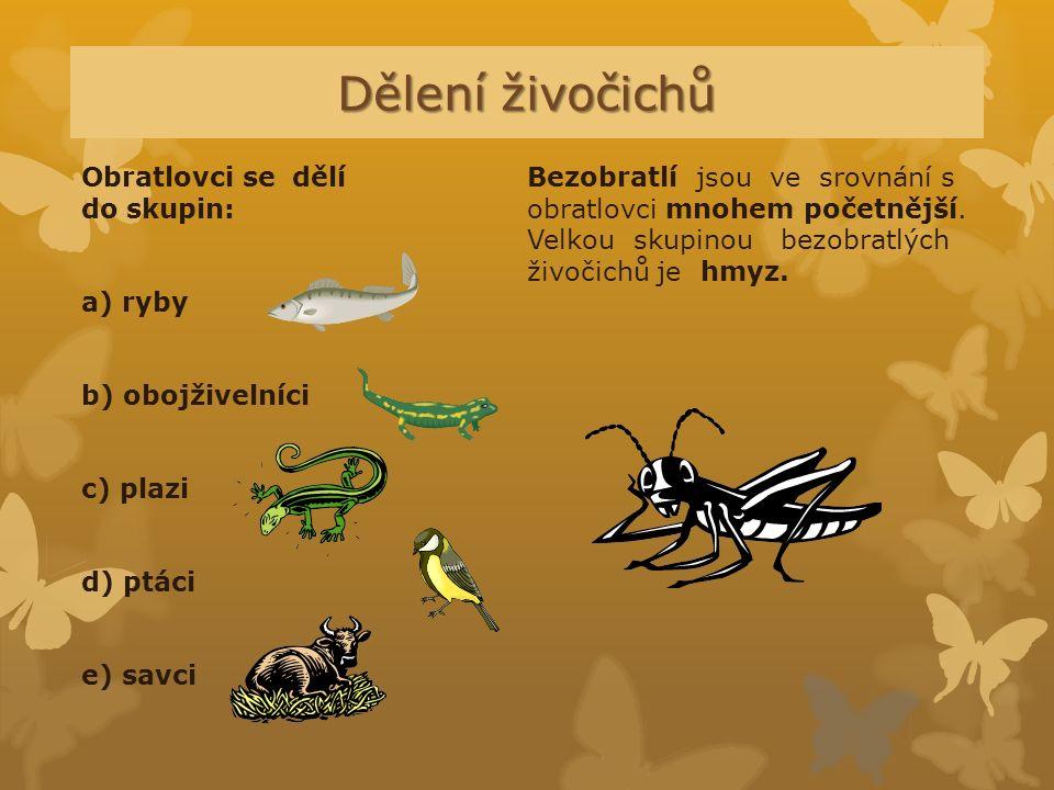 Dělení živočichů Obratlovci se dělí do skupin: a) ryby b) obojživelníci c) plazi d) ptáci e) savci Bezobratlí jsou ve srovnání s obratlovci mnohem poč