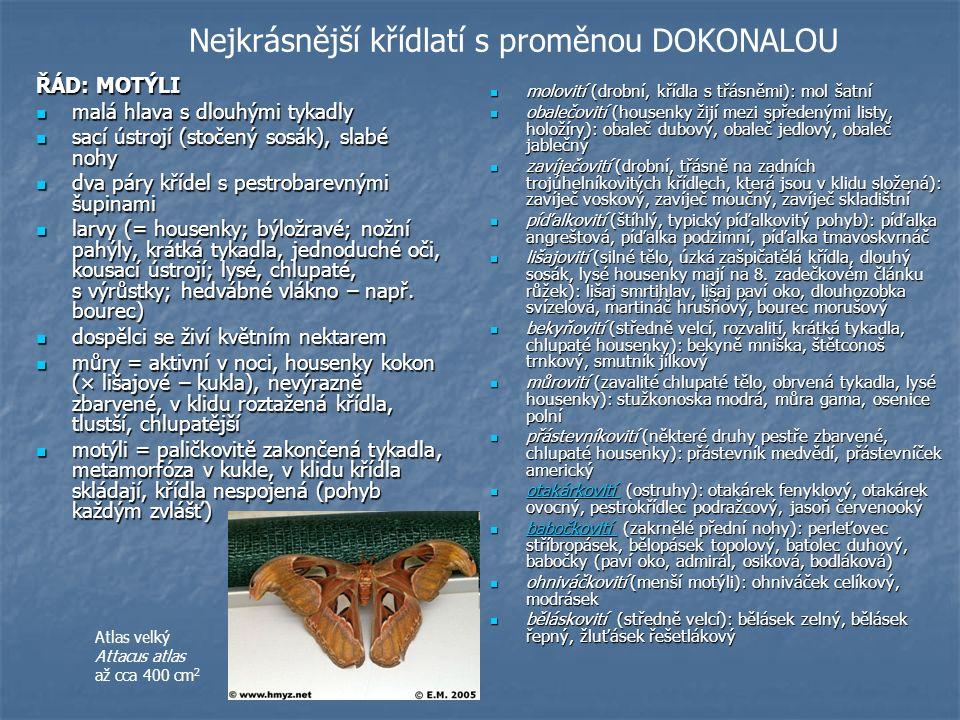 Nejkrásnější křídlatí s proměnou DOKONALOU ŘÁD: MOTÝLI malá hlava s dlouhými tykadly malá hlava s dlouhými tykadly sací ústrojí (stočený sosák), slabé nohy sací ústrojí (stočený sosák), slabé nohy dva páry křídel s pestrobarevnými šupinami dva páry křídel s pestrobarevnými šupinami larvy (= housenky; býložravé; nožní pahýly, krátká tykadla, jednoduché oči, kousací ústrojí; lysé, chlupaté, s výrůstky; hedvábné vlákno – např.