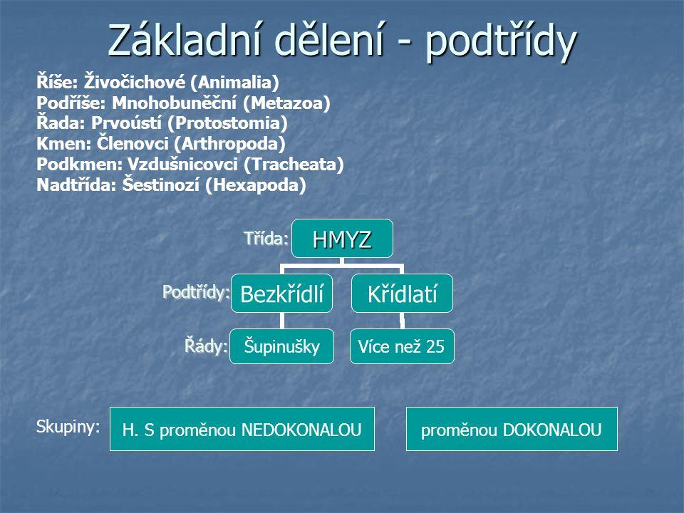 Základní dělení - podtřídy Třída: Podtřídy: Řády: Skupiny: H.