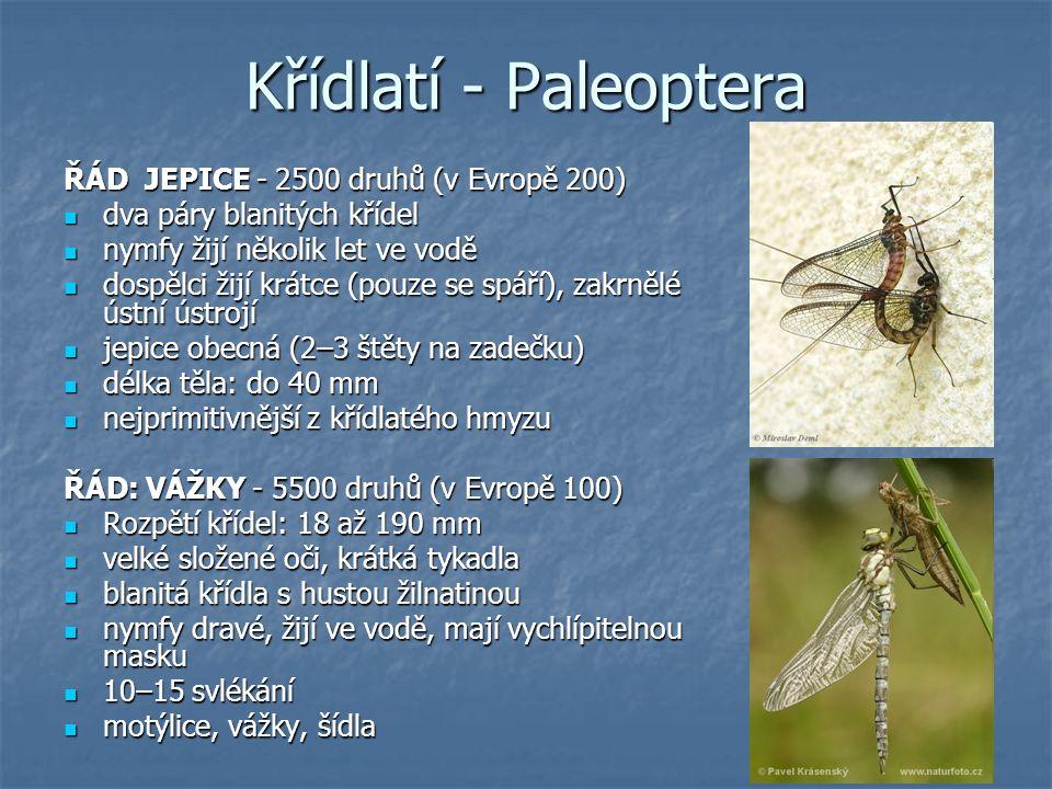 Křídlatí - Paleoptera ŘÁD JEPICE - 2500 druhů (v Evropě 200) dva páry blanitých křídel dva páry blanitých křídel nymfy žijí několik let ve vodě nymfy žijí několik let ve vodě dospělci žijí krátce (pouze se spáří), zakrnělé ústní ústrojí dospělci žijí krátce (pouze se spáří), zakrnělé ústní ústrojí jepice obecná (2–3 štěty na zadečku) jepice obecná (2–3 štěty na zadečku) délka těla: do 40 mm délka těla: do 40 mm nejprimitivnější z křídlatého hmyzu nejprimitivnější z křídlatého hmyzu ŘÁD: VÁŽKY - 5500 druhů (v Evropě 100) Rozpětí křídel: 18 až 190 mm Rozpětí křídel: 18 až 190 mm velké složené oči, krátká tykadla velké složené oči, krátká tykadla blanitá křídla s hustou žilnatinou blanitá křídla s hustou žilnatinou nymfy dravé, žijí ve vodě, mají vychlípitelnou masku nymfy dravé, žijí ve vodě, mají vychlípitelnou masku 10–15 svlékání 10–15 svlékání motýlice, vážky, šídla motýlice, vážky, šídla