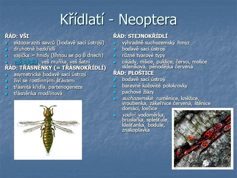 Podtřída Podtřída Křídlatí S proměnou DOKONALOU (vajíčko – larva – kukla – dospělec) S proměnou DOKONALOU (vajíčko – larva – kukla – dospělec) ŘÁD: SÍŤOKŘÍDLÍ 2 páry blanitých křídel s hustou žilnatinou 2 páry blanitých křídel s hustou žilnatinou larvy mají mimotělní trávení, jsou dravé larvy mají mimotělní trávení, jsou dravé zlatoočky, mravkolvi zlatoočky, mravkolvi ŘÁD: BLANOKŘÍDLÍ 2 páry křídel s řídkou žilnatinou 2 páry křídel s řídkou žilnatinou kousací nebo lízací ústní ústrojí kousací nebo lízací ústní ústrojí složené oči + 3 jednoduchá očka složené oči + 3 jednoduchá očka někteří žijí ve společenstvech někteří žijí ve společenstvech širopasí: pilatka, ploskohřbetka, pilořitka širopasí: pilatka, ploskohřbetka, pilořitka štíhlopasí (samičky mají kladélko): žlabatky, lumci, lumčíci, včely, vosy, sršni, čmeláci, mravenci štíhlopasí (samičky mají kladélko): žlabatky, lumci, lumčíci, včely, vosy, sršni, čmeláci, mravenci ŘÁD: BROUCI cca 300 000 druhů cca 300 000 druhů první pár křídel přeměněn v chitinové krovky, mezi nimi je malý trojúhelníkovitý štítek první pár křídel přeměněn v chitinové krovky, mezi nimi je malý trojúhelníkovitý štítek kousací ústní ústrojí kousací ústní ústrojí článkovaný zadeček (často kryt krovkami) článkovaný zadeček (často kryt krovkami) masožraví: střevlíci, svižníci, potápníci, vírníci, krajníci masožraví: střevlíci, svižníci, potápníci, vírníci, krajníci všežraví: hrobařík obecný, drabčík zdobený, páteříček sněhový, světluška větší, slunéčko sedmitečné, roháč obecný, chrobák velký, zlatohlávek hladký, nosorožík kapucínek, listokaz zahradní, chroust mlynařík, krasec měďák, kožojed obecný, červotoč proužkovaný, potemník moučný, tesaříci, mandelinka bramborová, klikoroh borový, nosatec lískový, lýkožrout smrkový všežraví: hrobařík obecný, drabčík zdobený, páteříček sněhový, světluška větší, slunéčko sedmitečné, roháč obecný, chrobák velký, zlatohlávek hladký, nosorožík kapucínek, listokaz zahradní, chroust mlynařík, krasec měďák, kožoje