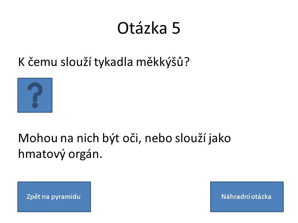 Otázka 5 K čemu slouží tykadla měkkýšů. Mohou na nich být oči, nebo slouží jako hmatový orgán.