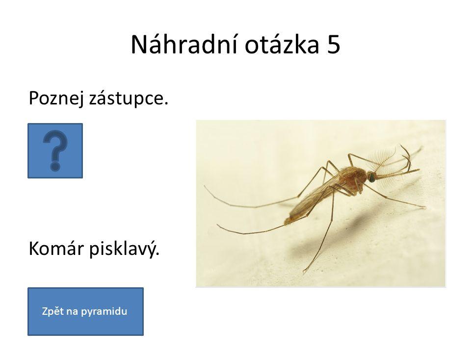 Náhradní otázka 5 Poznej zástupce. Komár pisklavý. Zpět na pyramidu