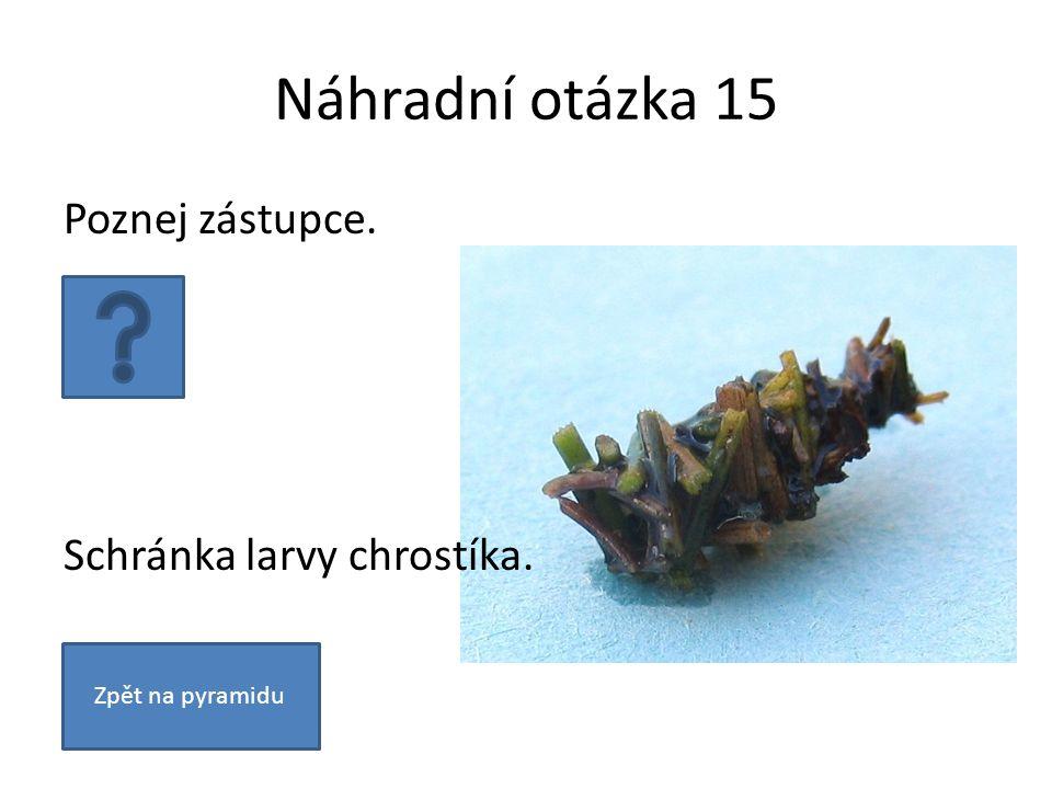 Náhradní otázka 15 Zpět na pyramidu Poznej zástupce. Schránka larvy chrostíka.