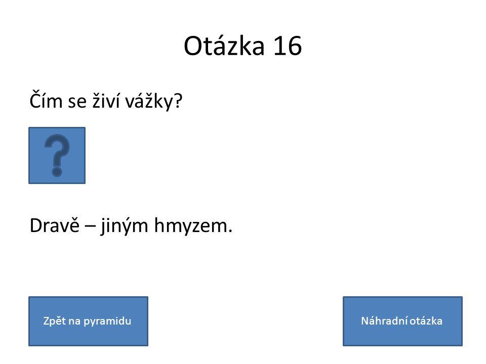 Otázka 16 Čím se živí vážky Dravě – jiným hmyzem. Zpět na pyramiduNáhradní otázka