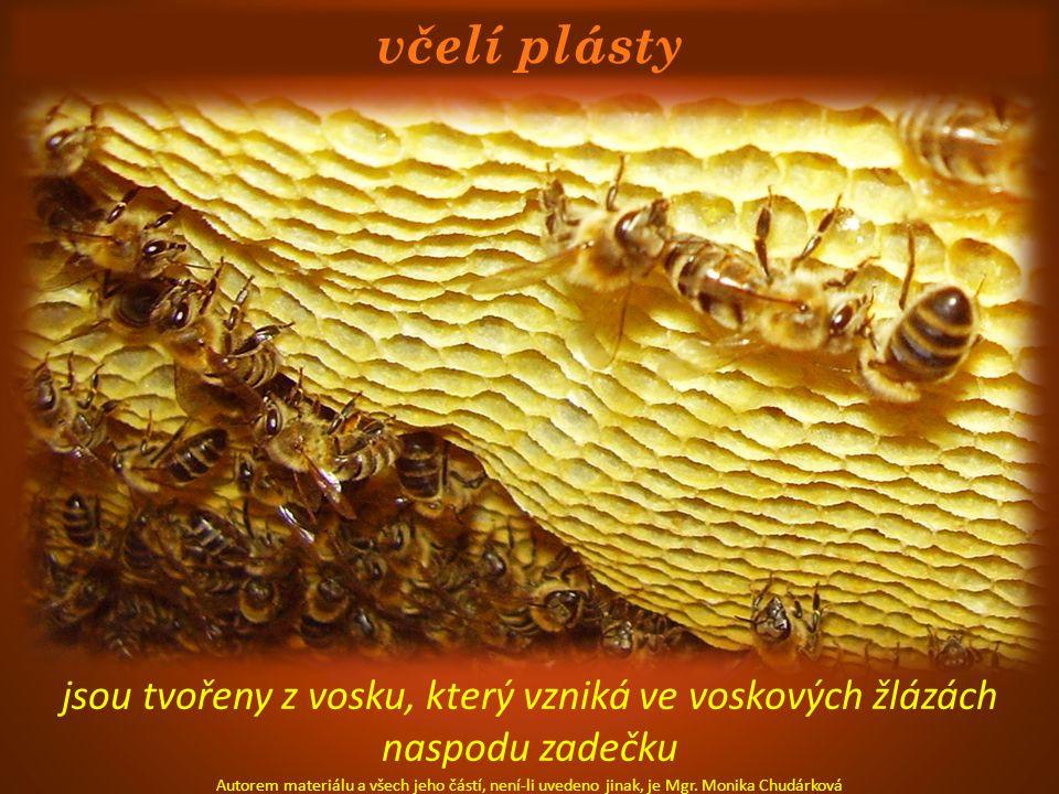 včelí plásty jsou tvořeny z vosku, který vzniká ve voskových žlázách naspodu zadečku Autorem materiálu a všech jeho částí, není-li uvedeno jinak, je M