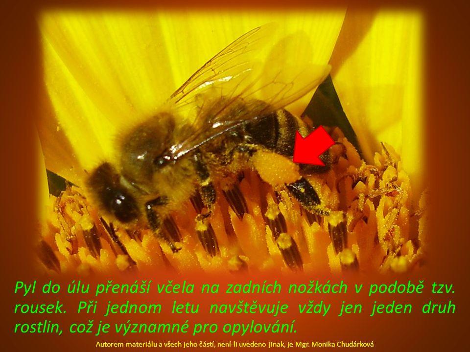 Pyl do úlu přenáší včela na zadních nožkách v podobě tzv. rousek. Při jednom letu navštěvuje vždy jen jeden druh rostlin, což je významné pro opylován
