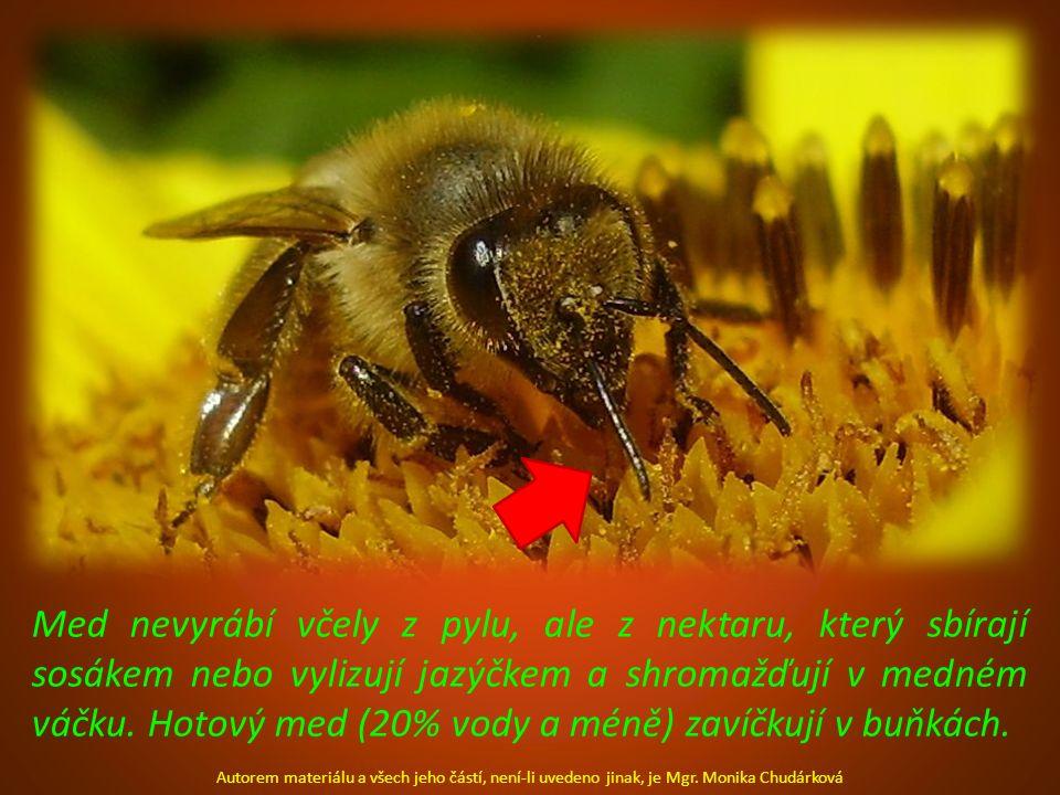 Med nevyrábí včely z pylu, ale z nektaru, který sbírají sosákem nebo vylizují jazýčkem a shromažďují v medném váčku. Hotový med (20% vody a méně) zaví